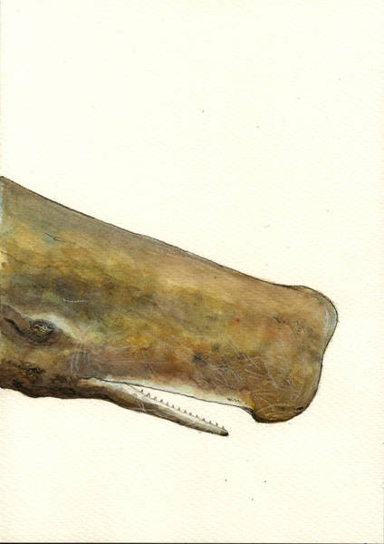 Cachalot Wall Art - Painting - Sperm Whale First Part by Juan  Bosco