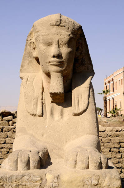 Photograph - Sphinx At Luxor Egypt by Brenda Kean