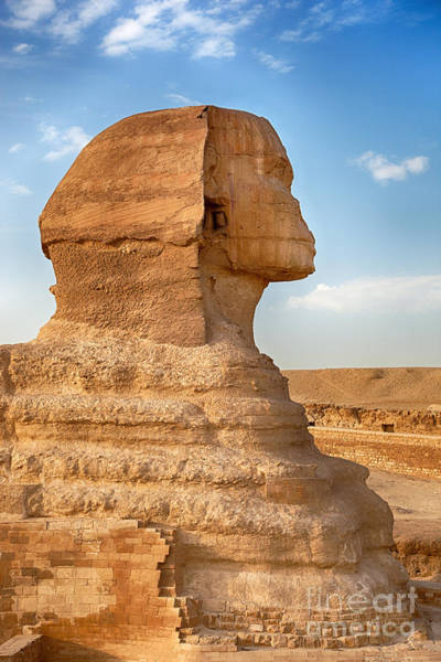 Giza Photograph - Sphinx Profile by Jane Rix