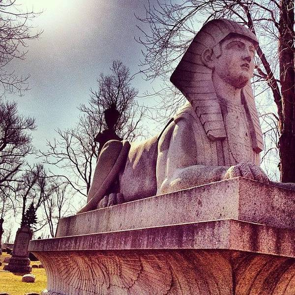 Wall Art - Photograph - Sphinx by Tammy Wetzel
