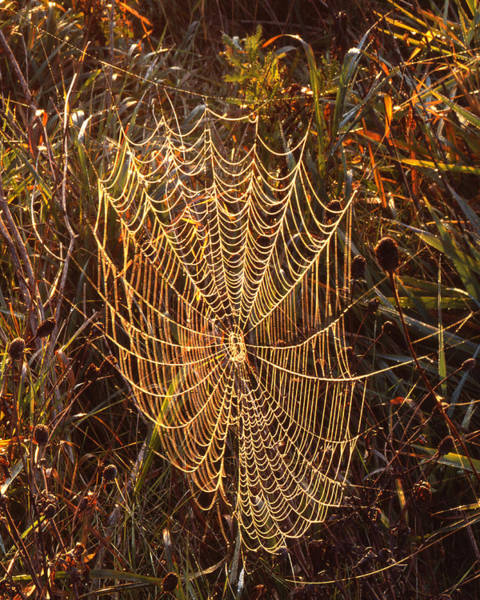 Photograph - Spider Art by Ray Mathis