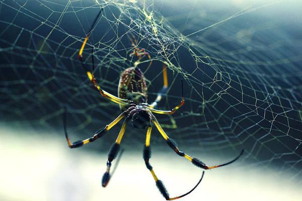 Photograph - Spider Close Up by Matt Hanson