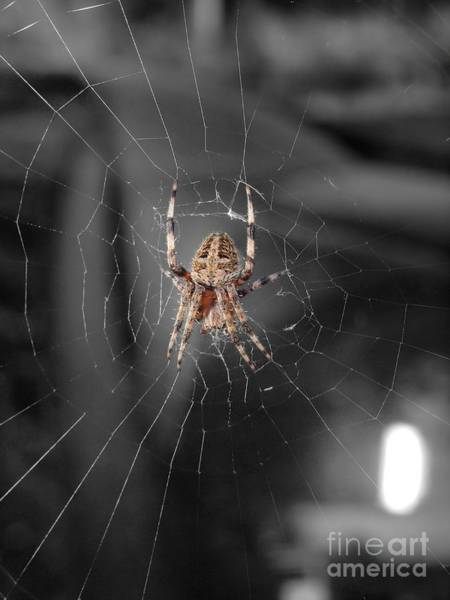 Wall Art - Photograph - Spider  by Frank Piercy
