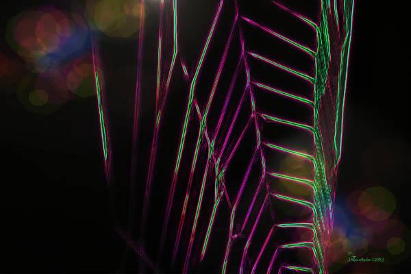 Photograph - Spider Highway by Ericamaxine Price