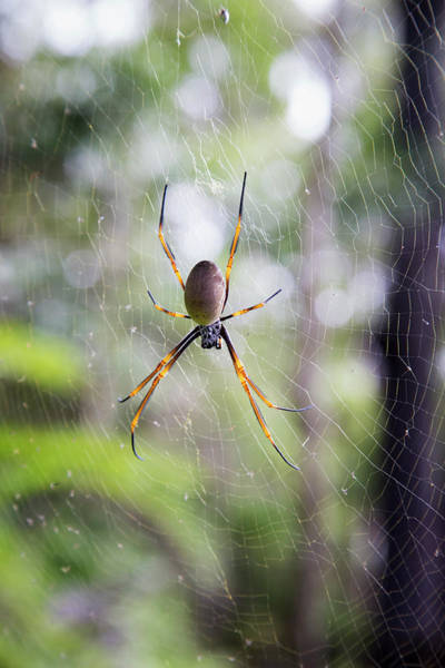 Noosa Wall Art - Photograph - Spider In A Web  Noosa Heads by John Short
