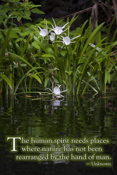 Spider Lily Wall Art - Photograph - Spider Lily Arrangement by W Chris Fooshee