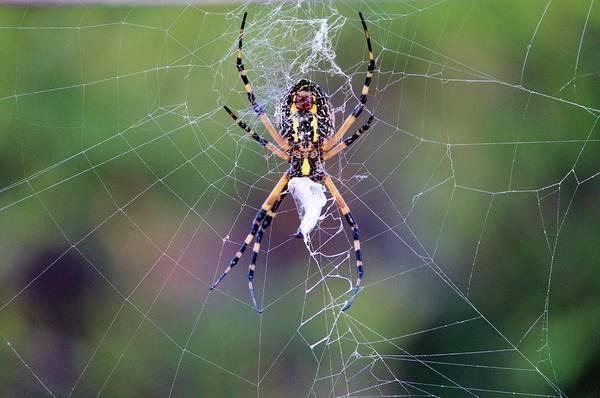 Photograph - Spider Making His Web by Cynthia Guinn