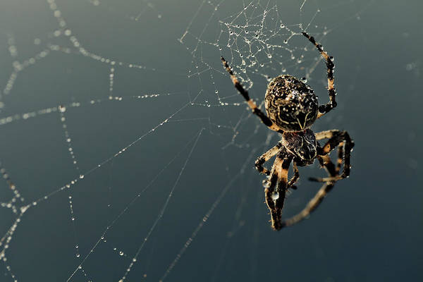 Ugliness Photograph - Spider by Mmeemil