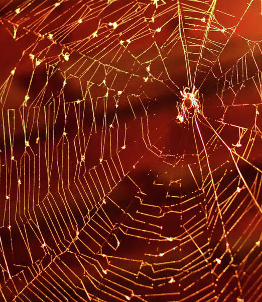 Natural Phenomenon Photograph - Spider Net Against Red Background by Jeff R Clow