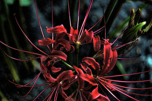 Hurricane Lily Digital Art - Spider Of September by Joe Bledsoe