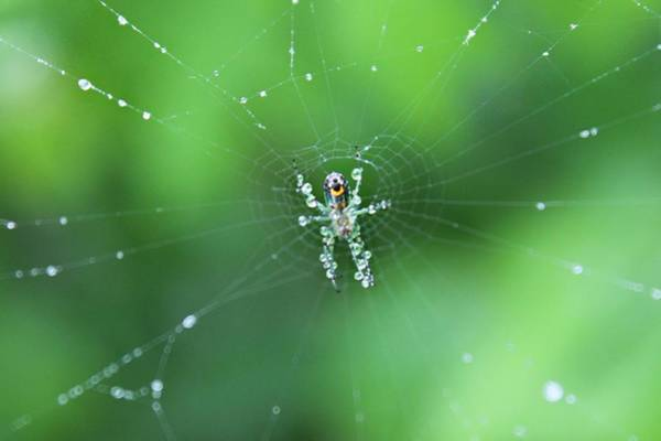 Photograph - Spider Raindrops by Candice Trimble