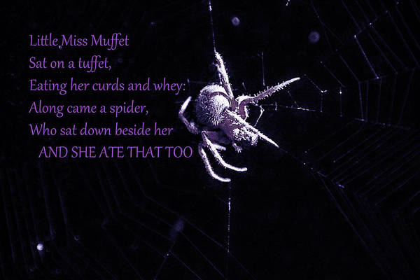 Photograph - Spider Spider by Ericamaxine Price