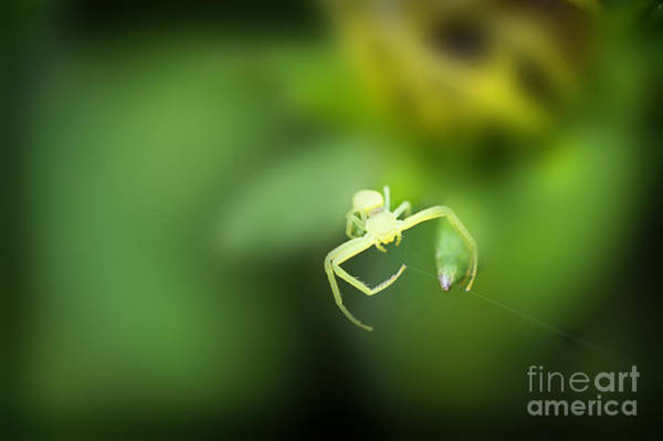 Photograph - Spider Weaving A Web by Dan Friend