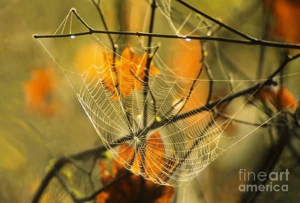 Photograph - Spider Web & Autumn Color by Richard & Ellen Thane
