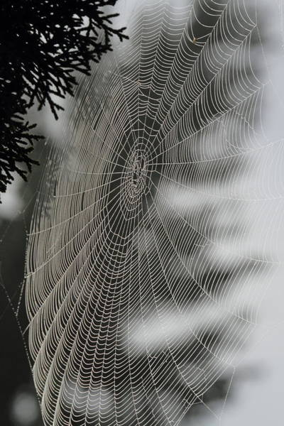 Vogel Photograph - Spider Web by Angie Vogel