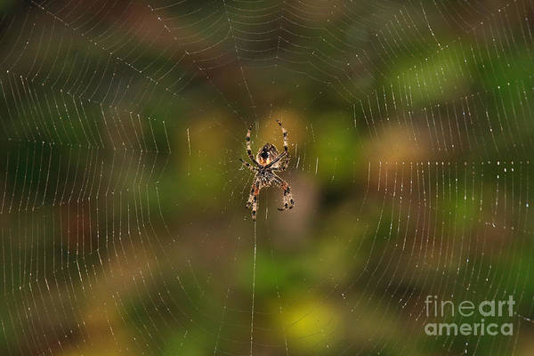 Photograph - Spider Web by Beth Sargent
