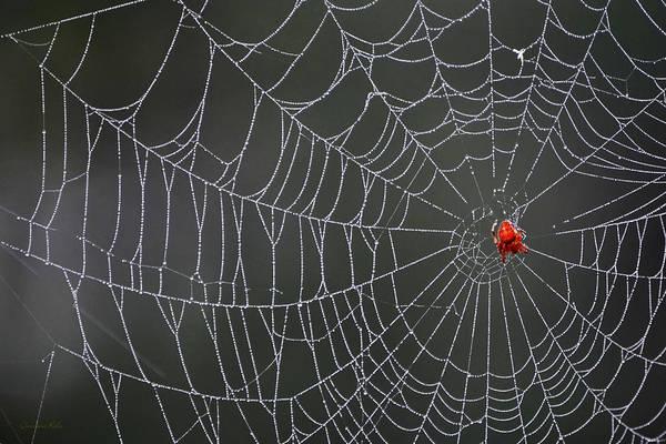 Photograph - Spider Web by Christina Rollo