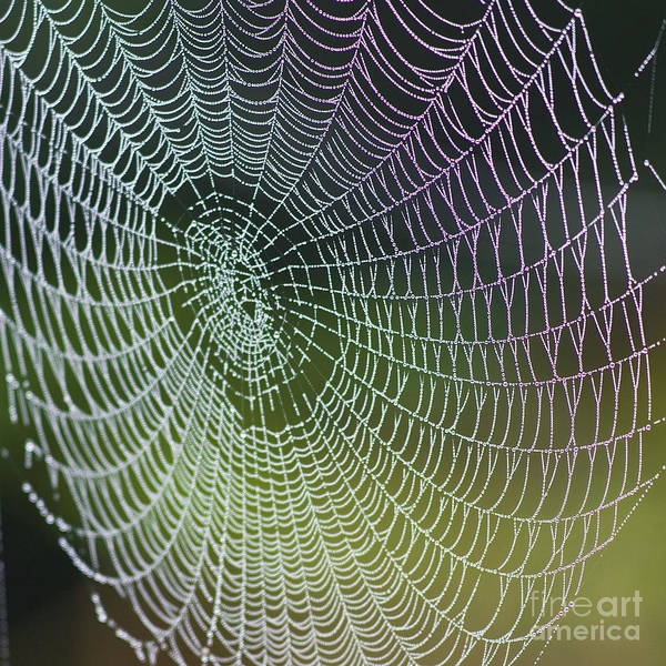 Spider Web Art Print