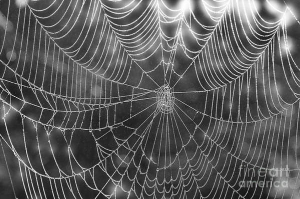 Photograph - Spider Web In Rain by Dan Friend