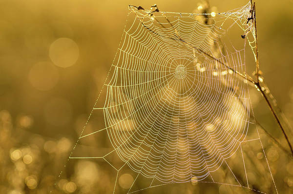 Everglades National Park Photograph - Spider Web, Indiantown, Florida by Rob Sheppard