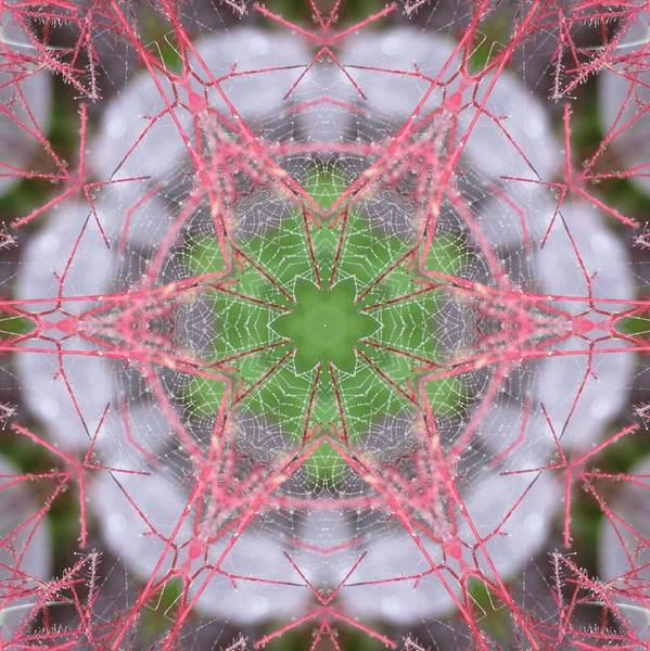 Digital Art - Spider Web On Smokebush by Trina Stephenson