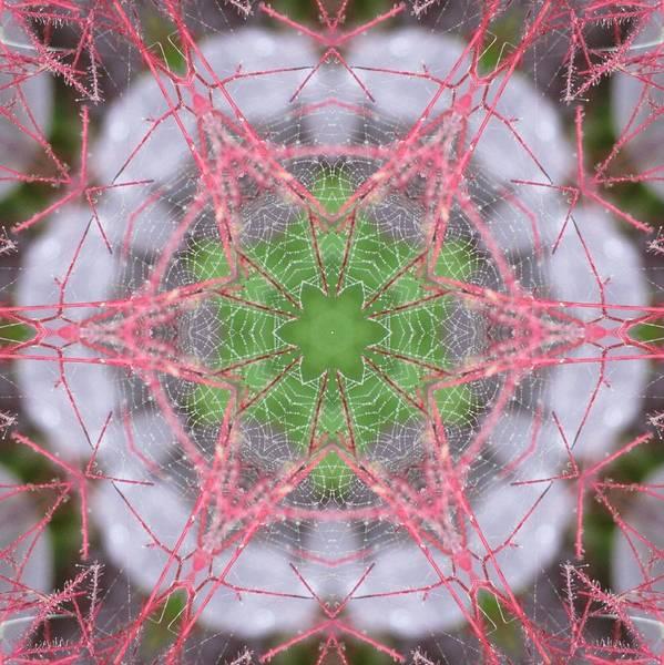 Spider Web On Smokebush Art Print