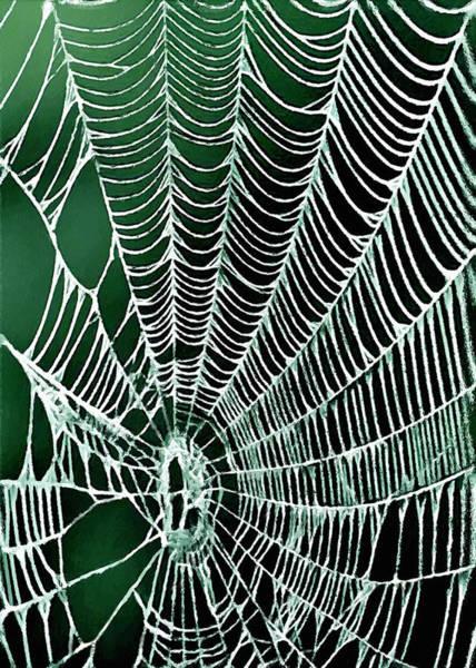 Painting - Spider Web Rancho Oso Santa Barbara California by Bob and Nadine Johnston