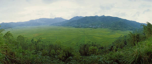 Flores Photograph - Spider Web Rice Field, Flores Island by Panoramic Images