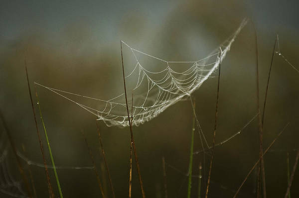 Photograph - Spider's Trap by Pete Rems