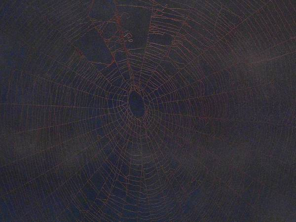Poison Mixed Media - Spiders Web 141 by Kenneth Albury