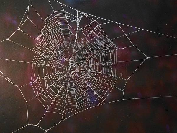 Poison Mixed Media - Spiders Web 145 by Kenneth Albury