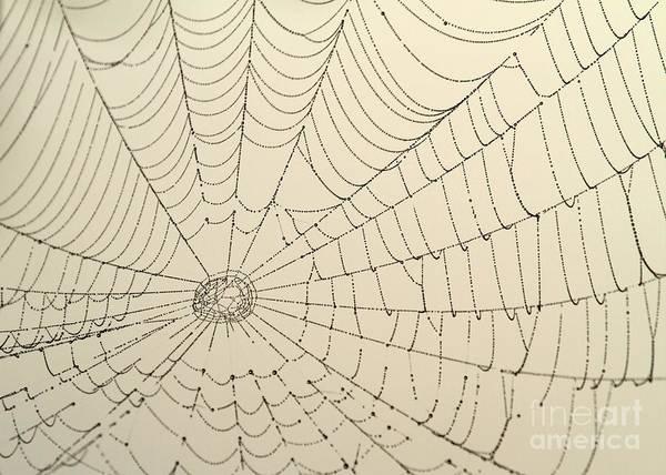 Photograph - Spiderweb At Dawn by Sabrina L Ryan