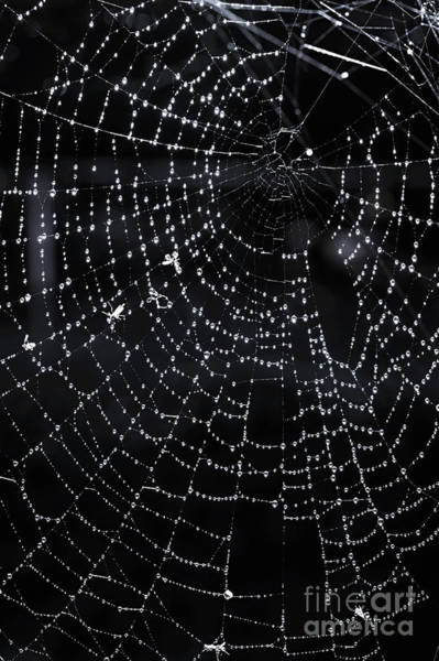 Halloween Photograph - Spiderweb by Elena Elisseeva