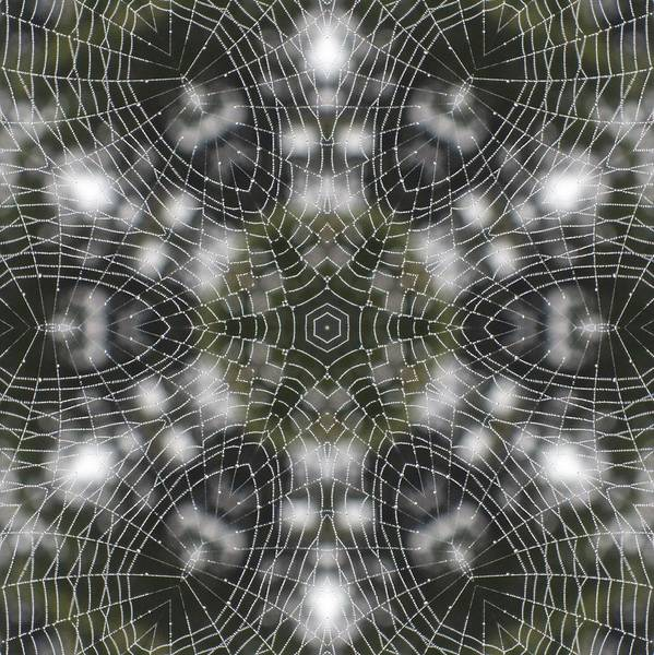 Spiderweb In Black Art Print