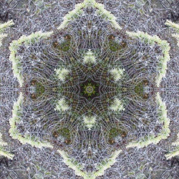 Digital Art - Spiderweb Pattern by Trina Stephenson