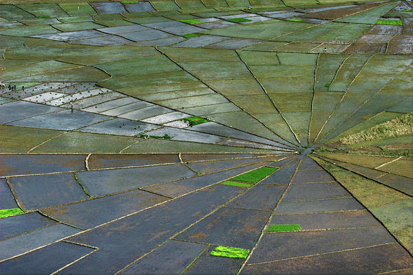 Flores Photograph - Spiderweb Rice Terraces by Photo ©tan Yilmaz
