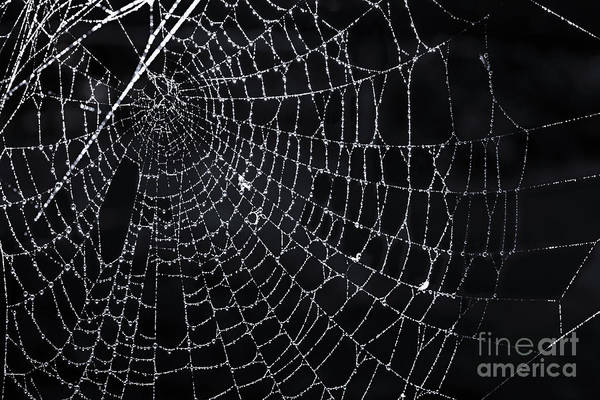 Halloween Photograph - Spiderweb With Dew by Elena Elisseeva