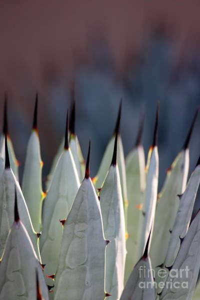 Wall Art - Photograph - Spikes by Ruth Jolly