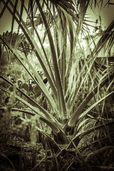 Photograph - Spikey Reach by Melinda Ledsome
