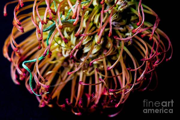 Spiky Flower Art Print by Mina Isaac