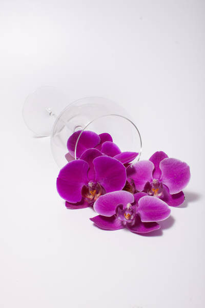 Wall Art - Photograph - Spilled Orchids  54 by W Chris Fooshee
