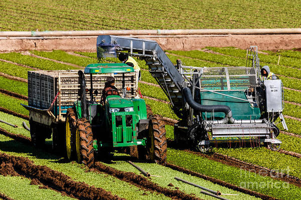 Yuma Photograph - Spinach Harvest by Robert Bales