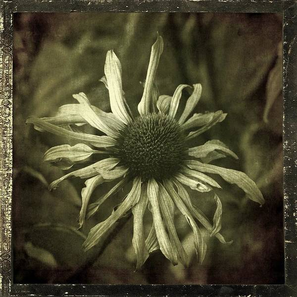 Photograph - Spindly by Patricia Strand