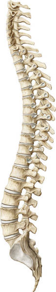 Photograph - Spine, Illustration by QA International