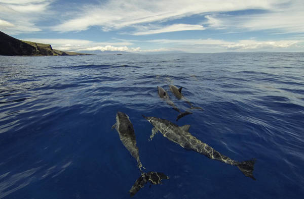 Lanai Photograph - Spinner Dolphins Of Lanai by Brad Scott