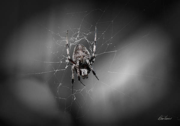 Photograph - Spinning A Web by Diana Haronis