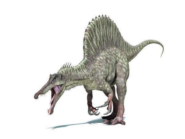 Prehistoric Era Wall Art - Digital Art - Spinosaurus Dinosaur, Artwork by Leonello Calvetti