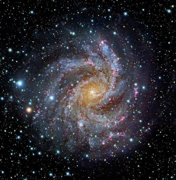 Astrophysical Wall Art - Photograph - Spiral Galaxy Ngc 6949 by Robert Gendler/science Photo Library