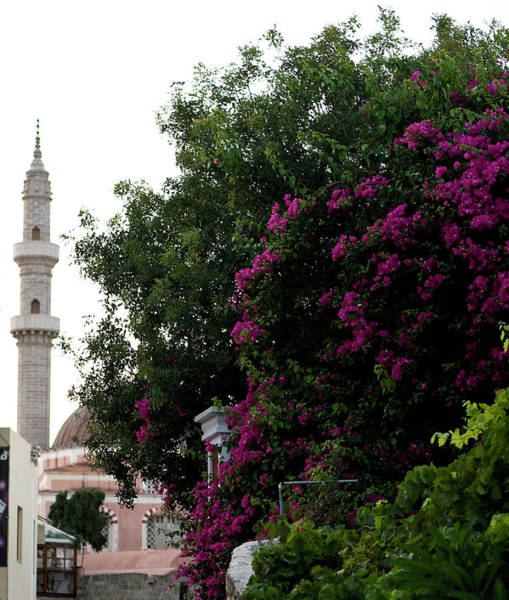 Photograph - Spire And Bougainvillea by Lorraine Devon Wilke