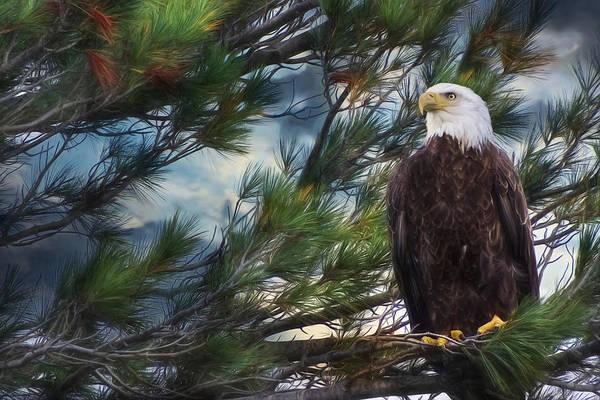 Wall Art - Photograph - Spirit Of Freedom by Lori Deiter